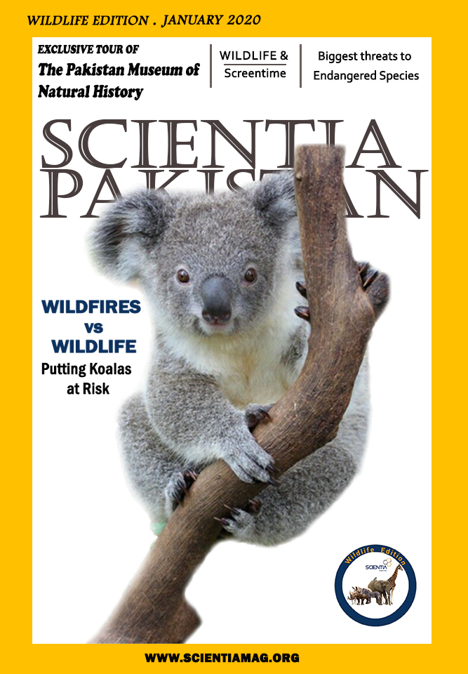 Wildlife Edition January Cover
