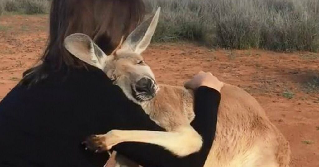 A woman hugs a Kangaroo