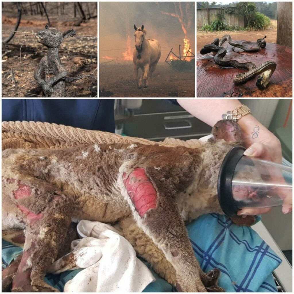 The fire has affected the wild animals the most. A staggering 500 million animals are feared dead.