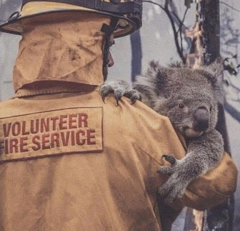 A koala in the arms of a firefighter