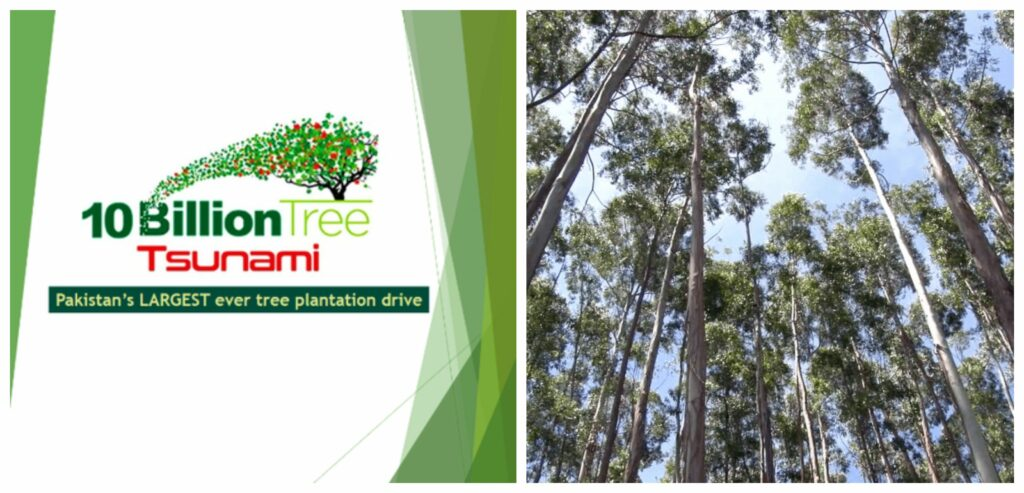 Eucalyptus trees can cause trouble in the '10 Billion Tree Tsunami' project.