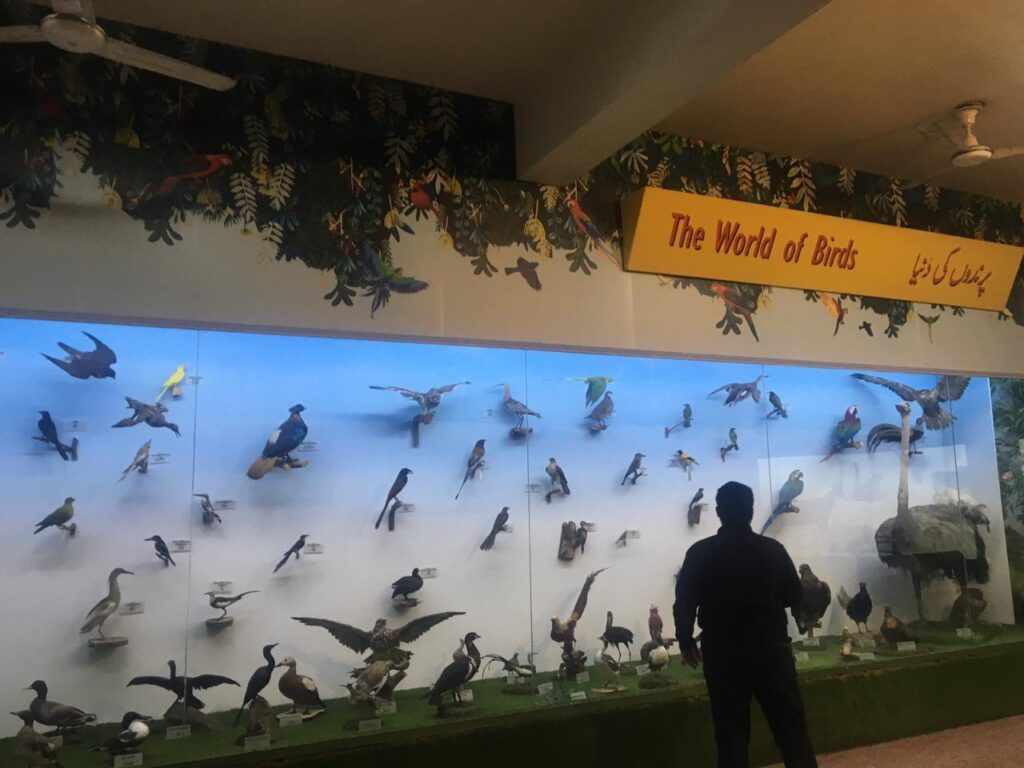 A picture containing flock, bird, wall, standing  Description automatically generated