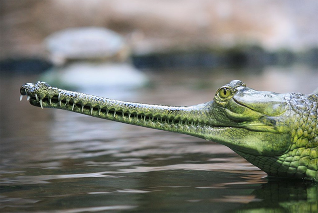 A close up of a reptile  Description automatically generated