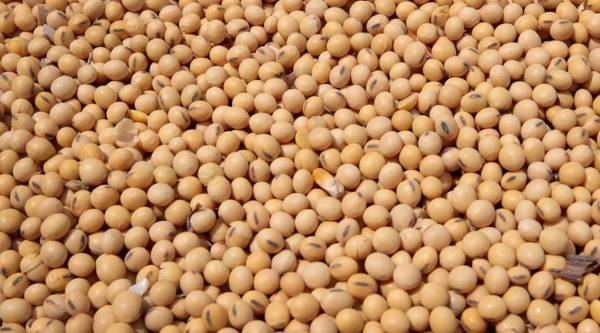 Dr. Atta ur Rehman spoke out about the situation and stated that these deaths are caused by Soya Bean aerosol particle